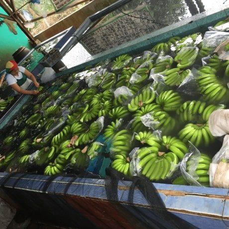 banana04-min